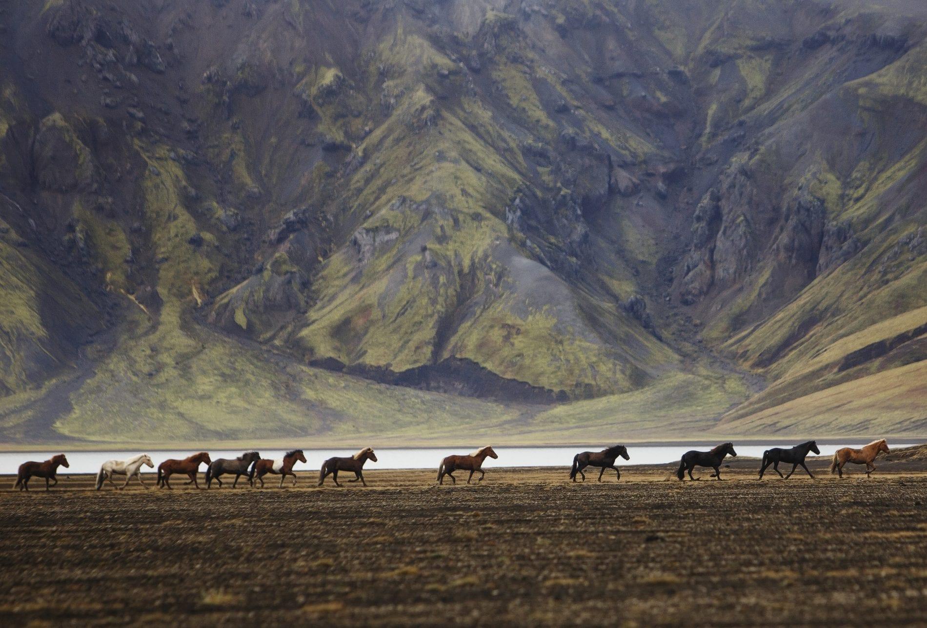 Thirteen horses in a row pass a lake on their left in stunning Landmannalaugar.