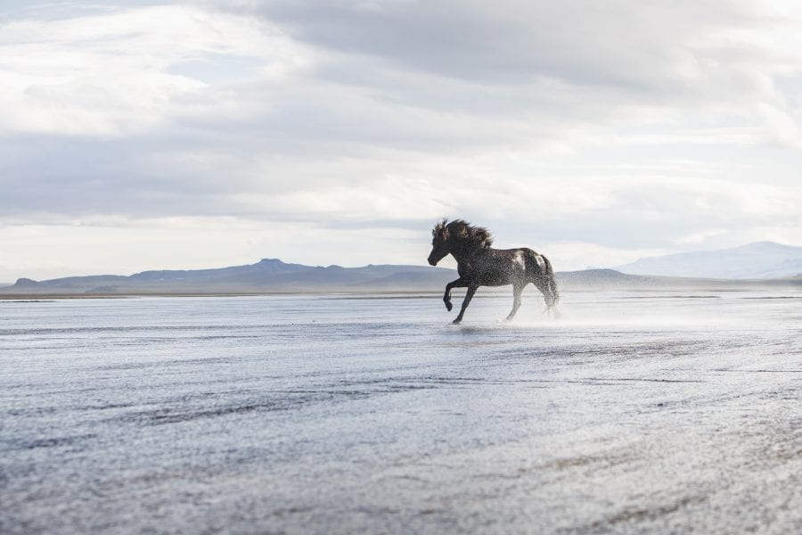 In the expanse of nature, a horse walks in shallow water