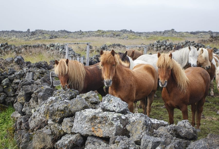 Three horses facing front surrounded by stacked rocks