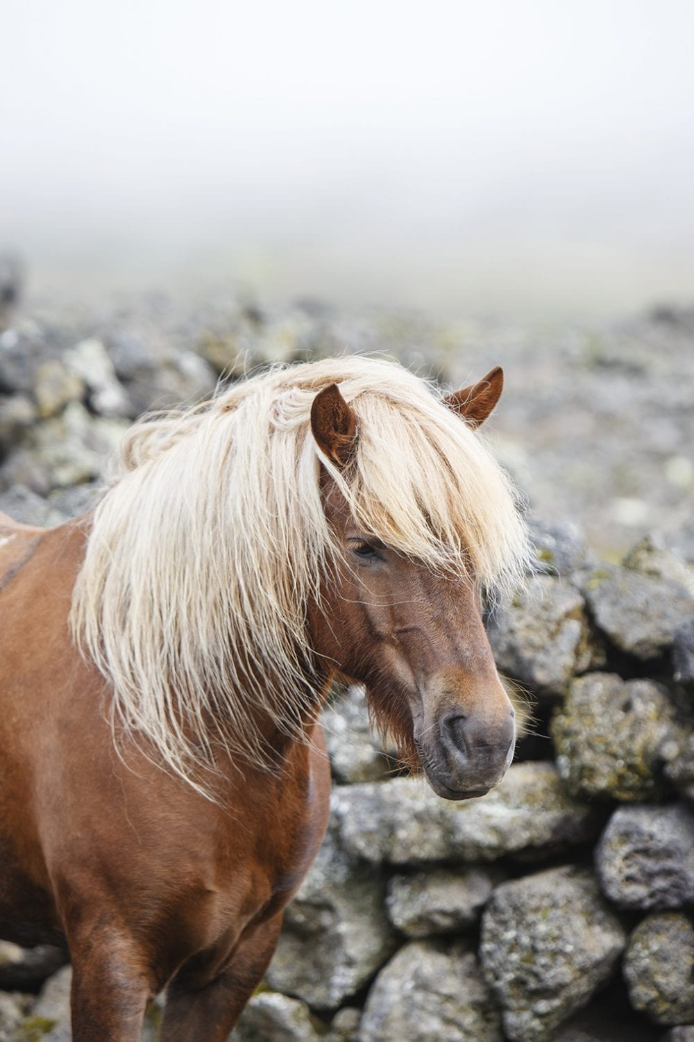 A beautiful horse stands by stacked rocks in foggy weather