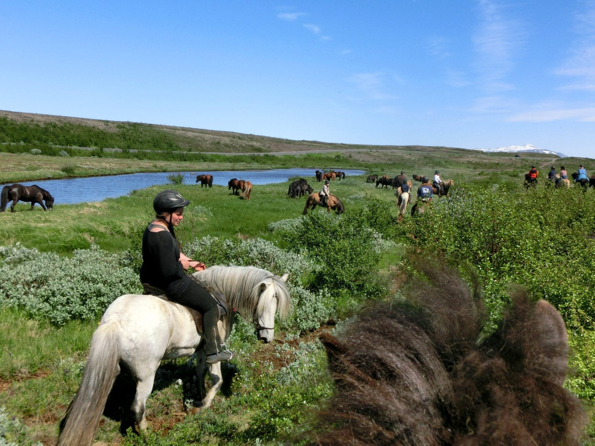 Horses pause to bite grass by a river. Shrubs and bushes under blue sky.