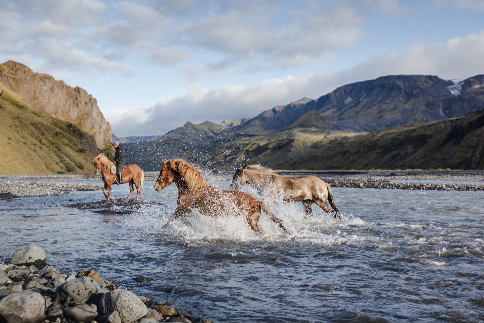 Three horses passing a river