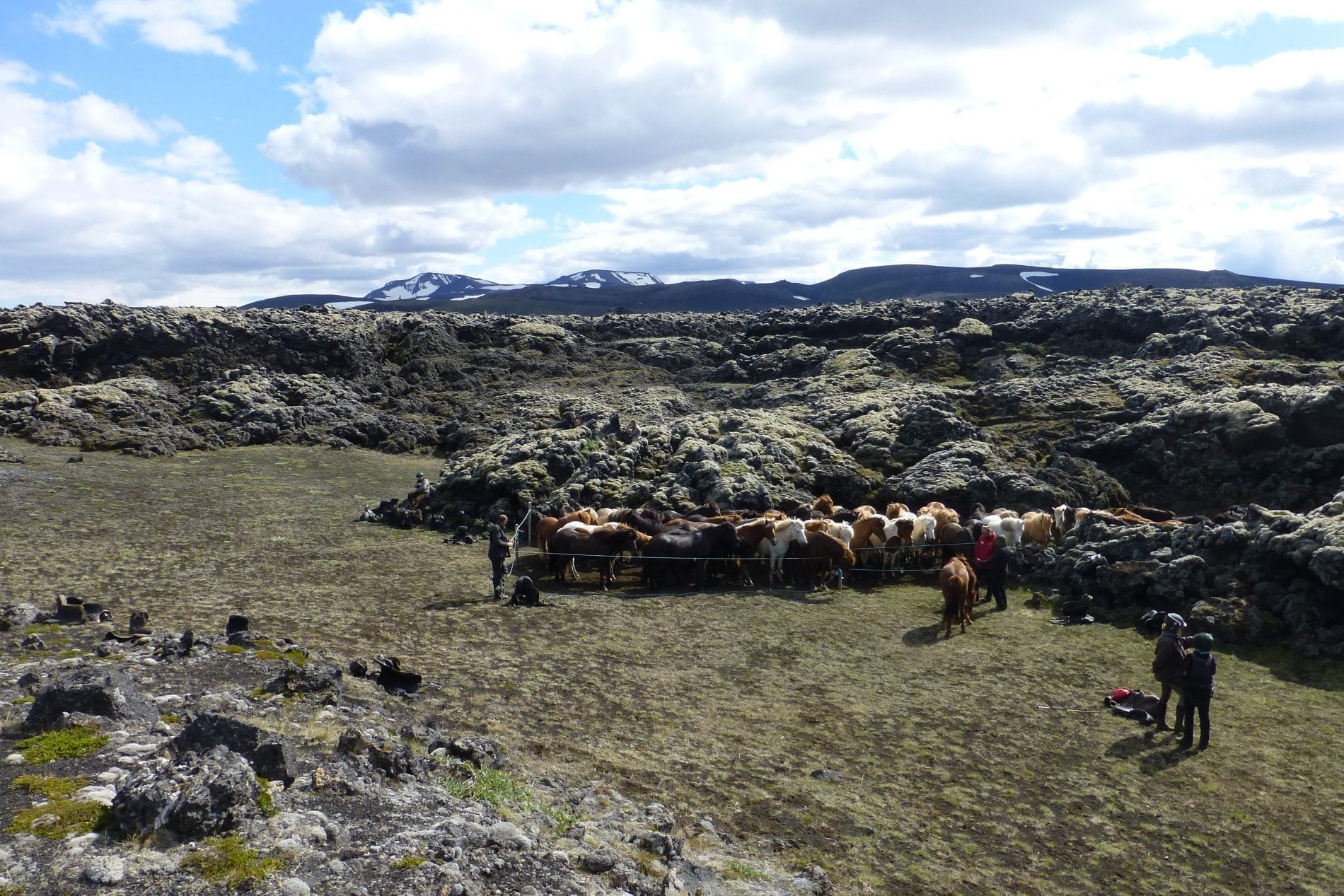 Horses fenced up next to a mossy lava field