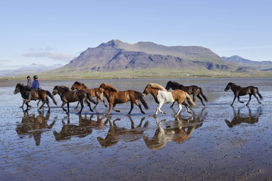 Two riders and eight horses on a long sandy beach