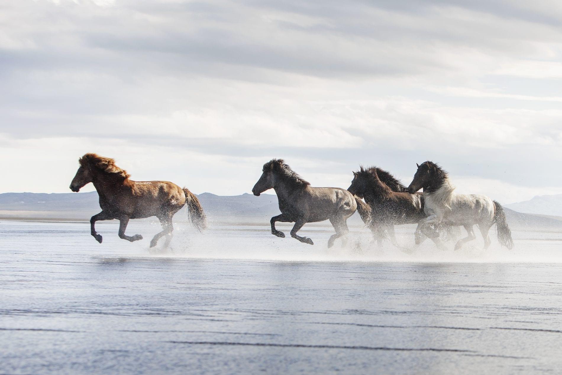Five horses running along extended sand beach