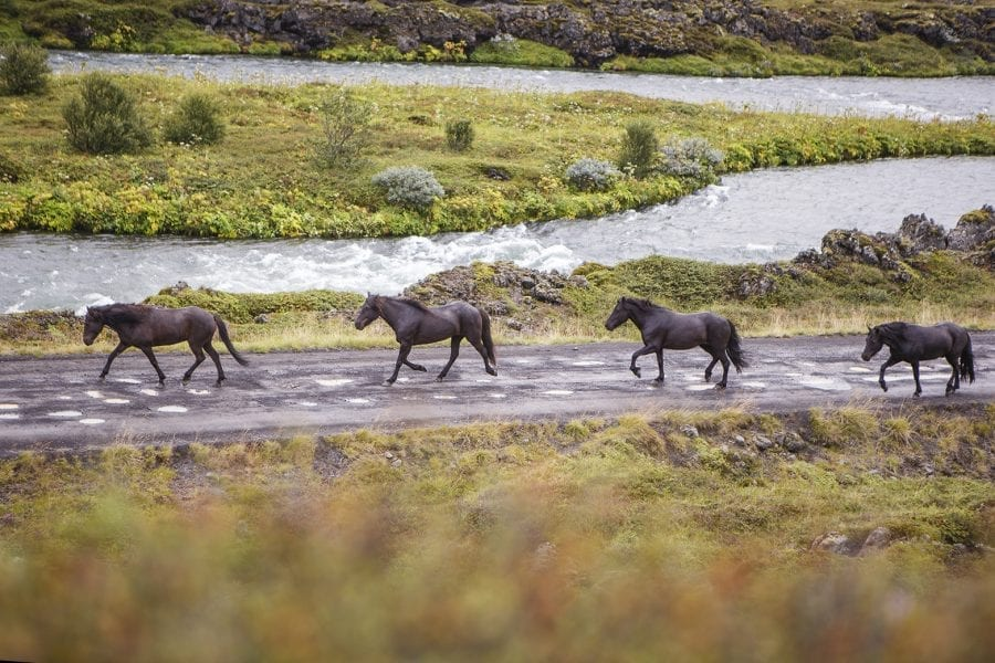 horseback riding tour in Iceland