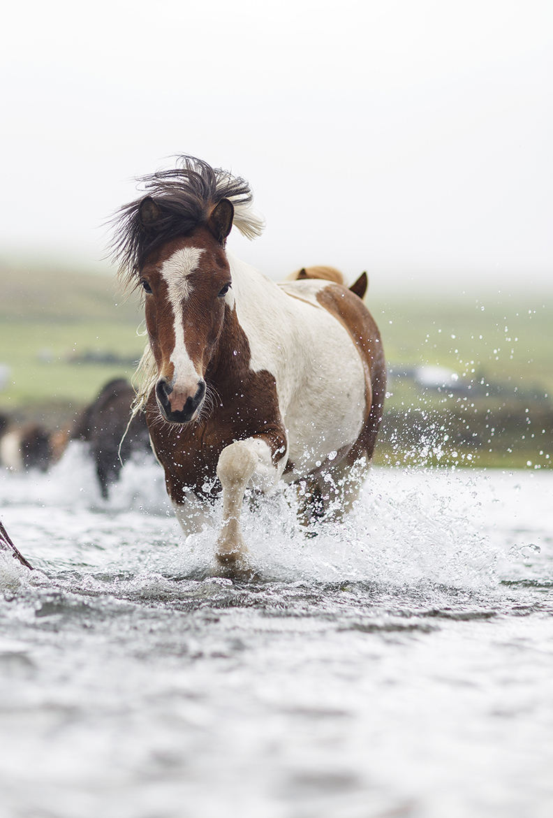 Horse riding tour in North Iceland